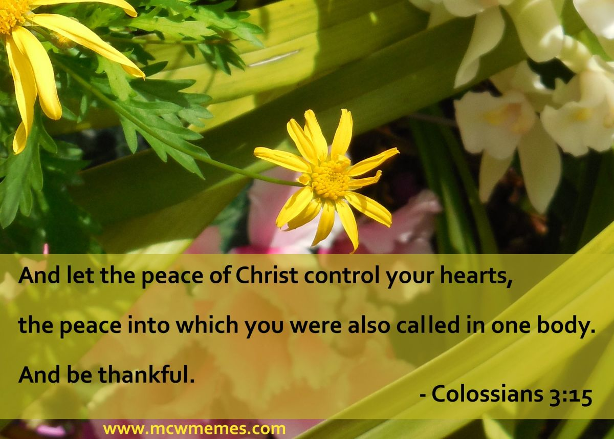 colossians_3_15